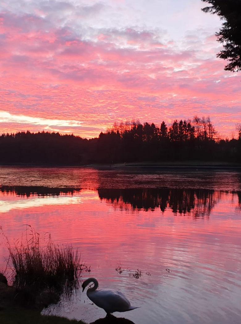 vortex-centre-pink-nature